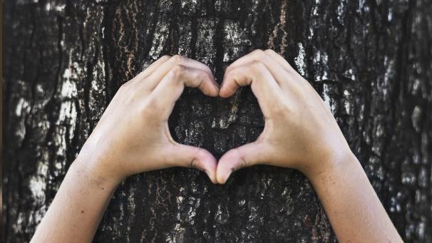Hände formen ein Herz SIYA nachhaltiges Holz