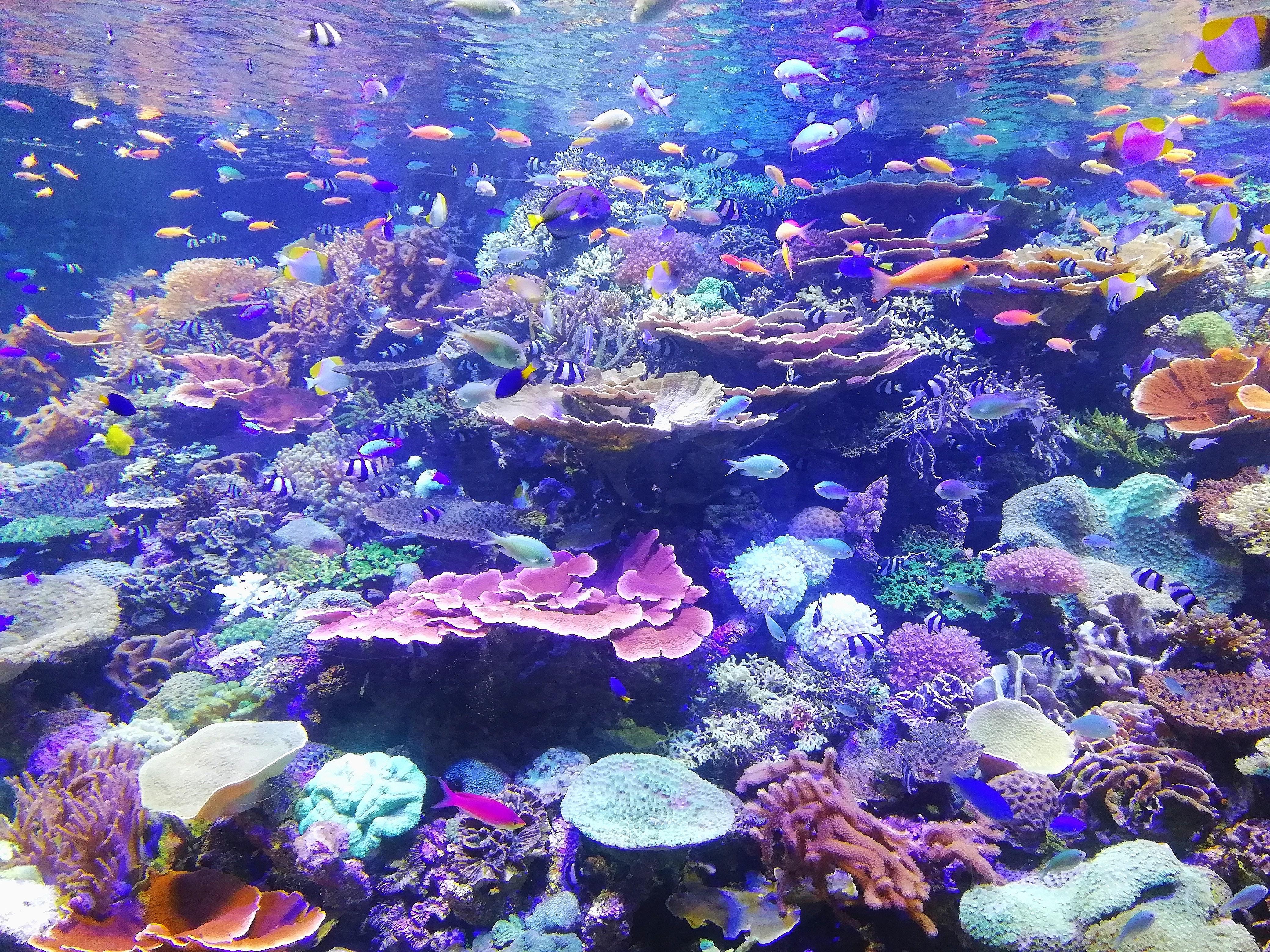 Bild eines Korallenriffs